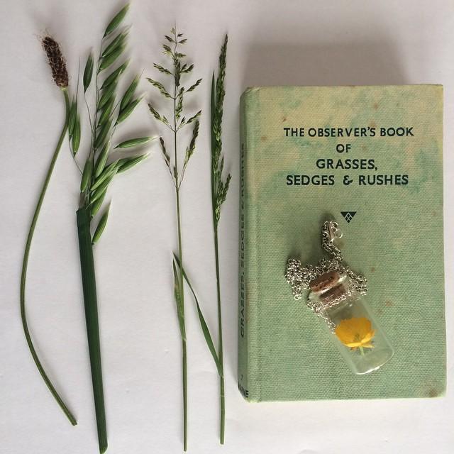 littlegreenshed blog