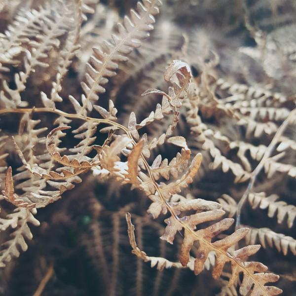 Littlegreenshed Blog - weekends collected, October