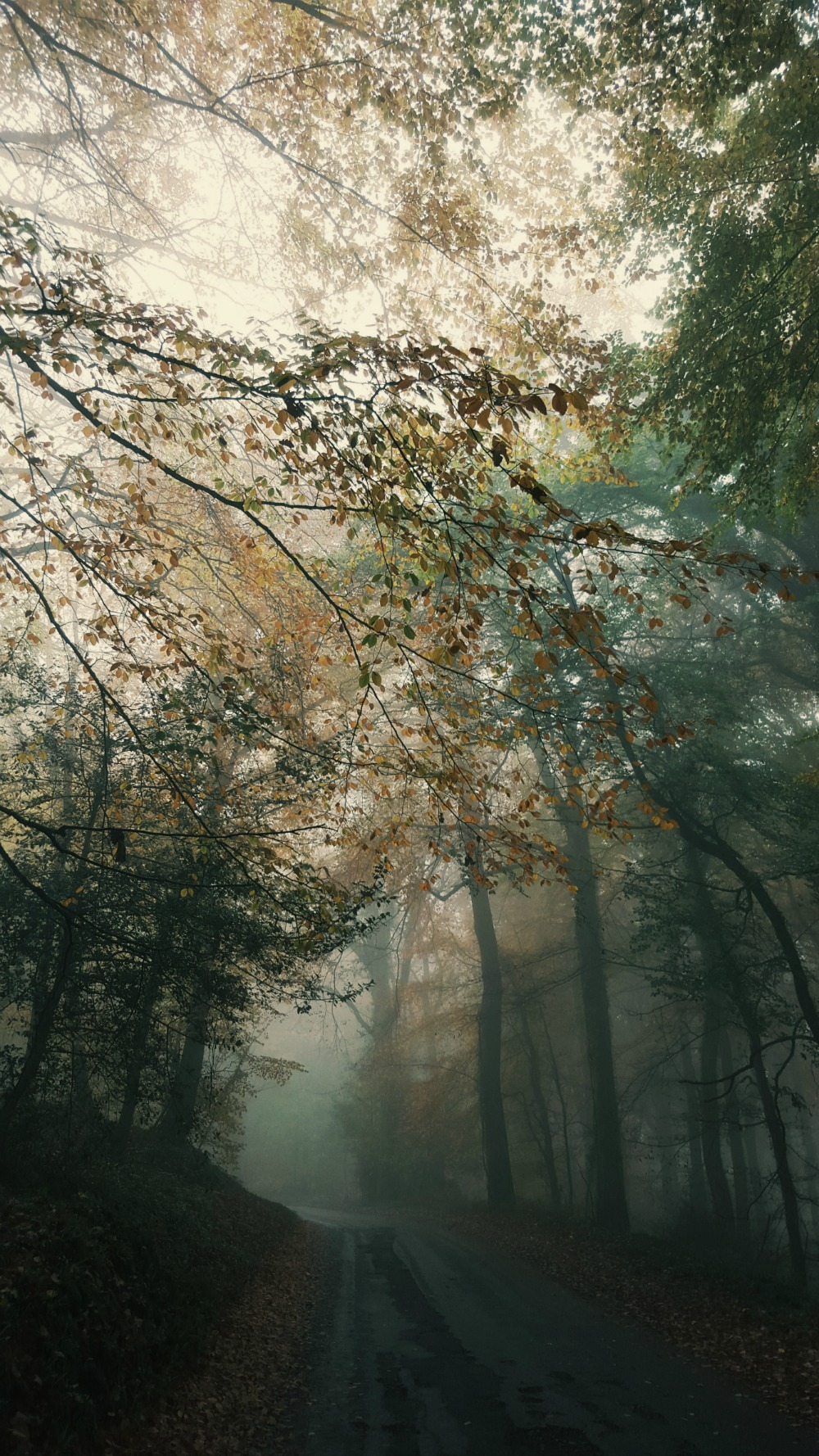 Littlegreenshed UK travel & lifestyle blog - Autumn fog sisterhood