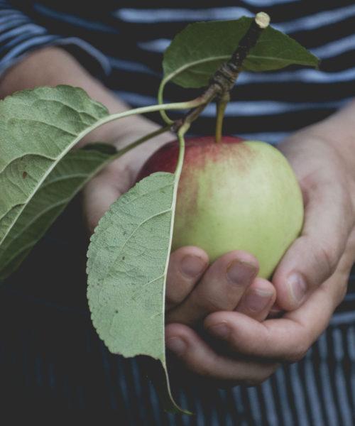 apple scrumping lou-archell-littlegreenshed-2016