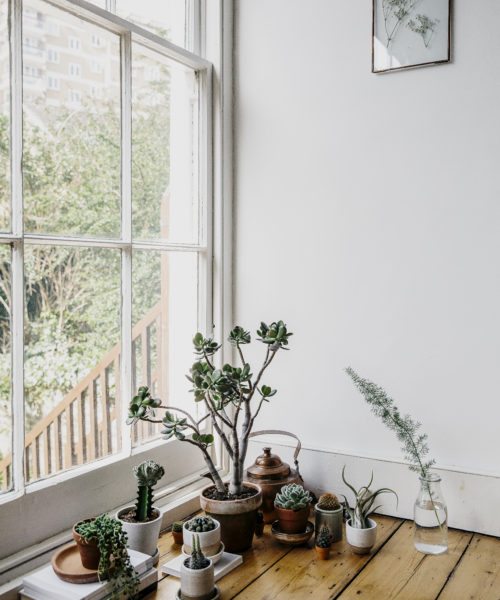 Littlegreenshed Blog House of PLants book review