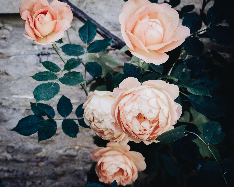 Sign of the angel, lacock, wilts littlegreenshed blog