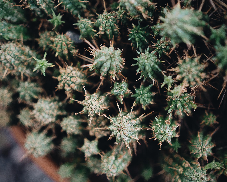 Jersey botanical gardens travel Littlegreenshed