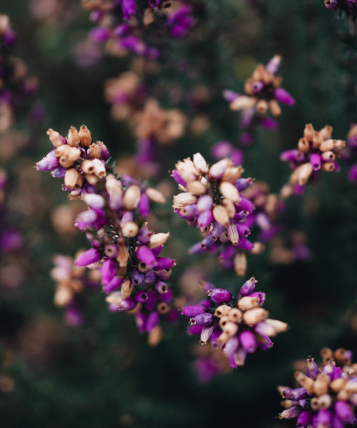 Littlegreenshed 2017 scenes from sunday quantock hills