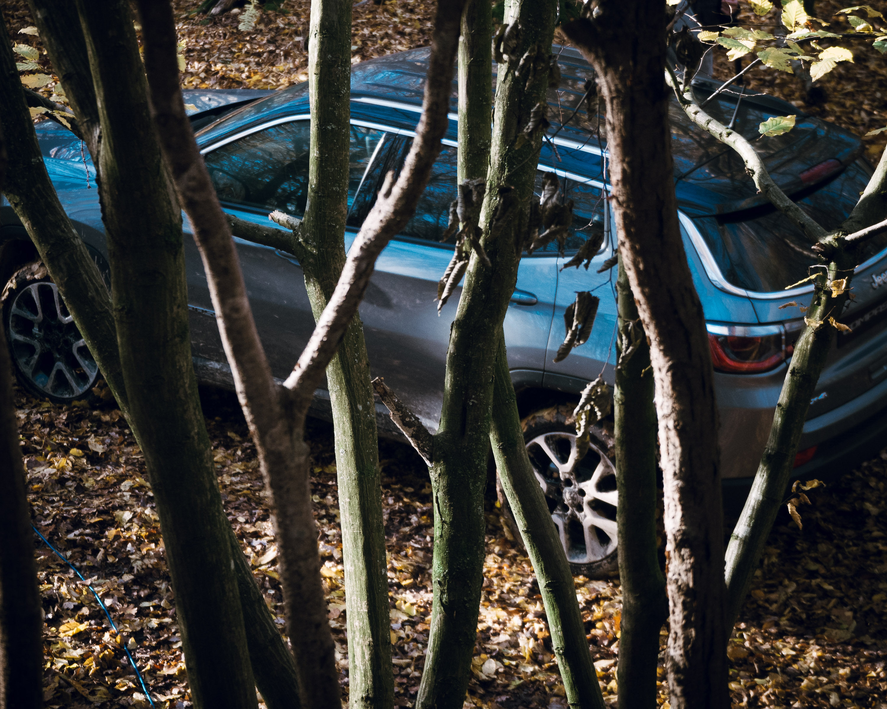 Jeep Compass Foraging