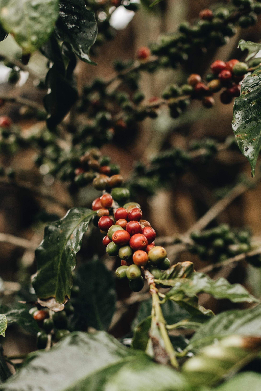 Nespresso costa rica Littlegreenshed